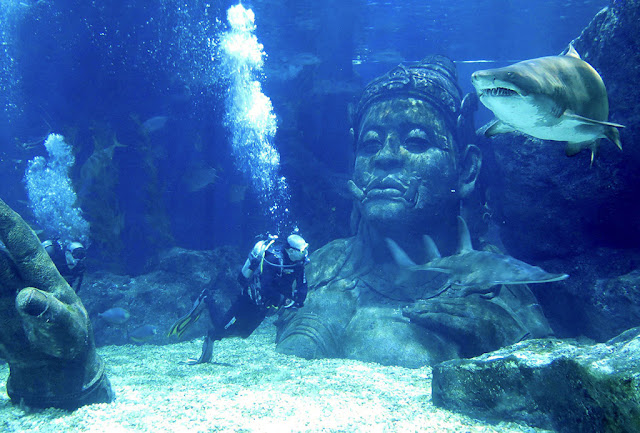 Admire and revel in the beauty of the sharks in their aquarium in Sea Life Bangkok Ocean World