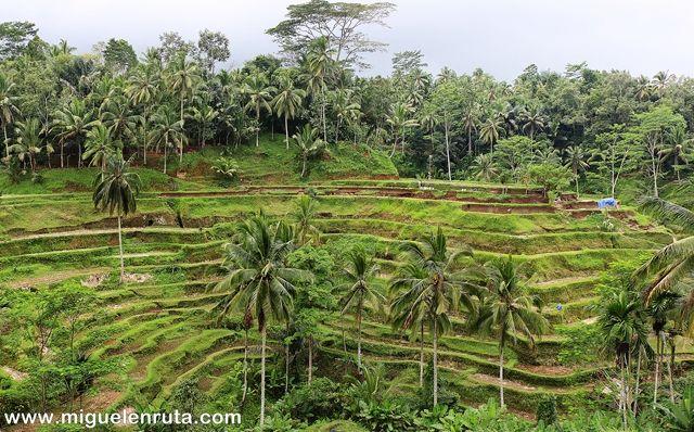 Terrazas-arroz-Tegalalang