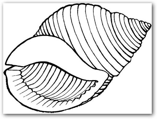 Dibujos Infantiles De Caracoles Para Colorear: Dibujos Para Colorear Caracoles De Mar