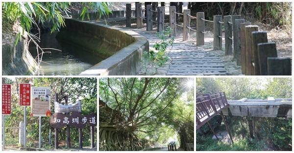 台中烏日|知高圳步道|枕木步道|老榕樹|空中廊道|引水橋|全程平緩幽靜好散步