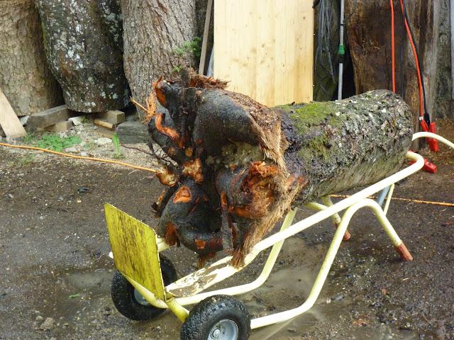 Was mach ich mit meinem alten Baum im Garten