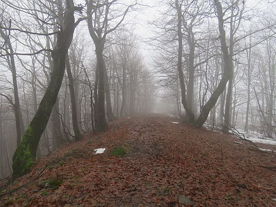 Aleja pośród drzew lasu.