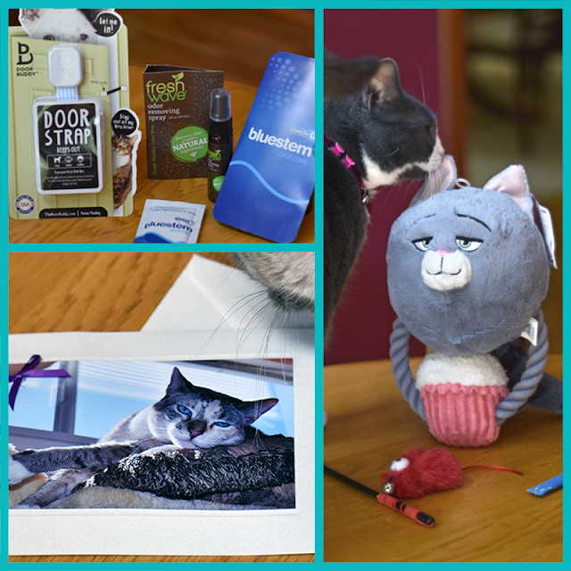 More awesome stuff from vendors and our kitty friends!