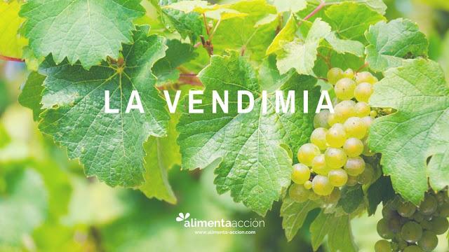 vendimia, uva, alimenta acción, alimentación, procesos productivos, vino