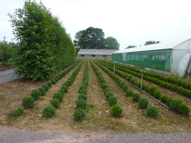 Adams Apple Trees Windbreaks For Orchards