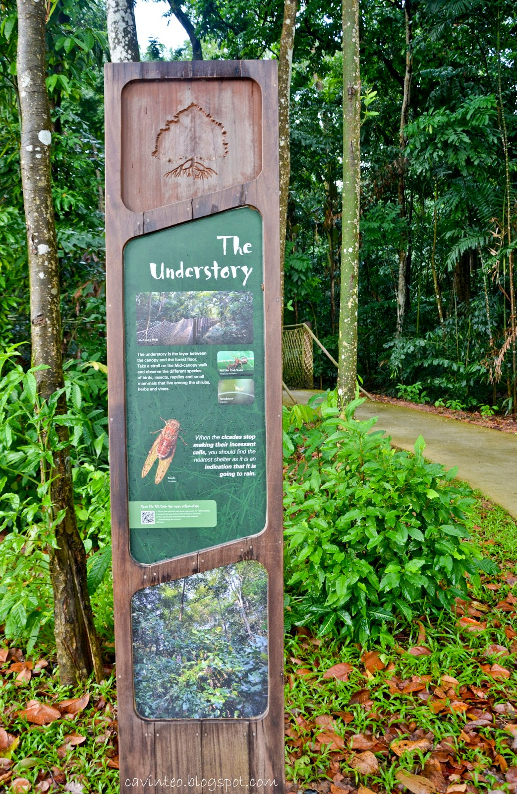... HSBC Treetop Walk i can feel my heartstrings tugging me towards the canopy walk at Sungei Buloh Wetland Reserve Extension when i saw the sign. & Entree Kibbles: The Understory - Mid Canopy Walk @ Sungei Buloh ...