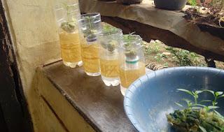 botol bekas untuk budidaya hidroponik