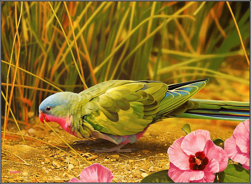 Beautiful hd wallpapers full hd wallpapers - Animal and bird hd wallpaper ...