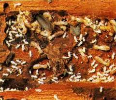 Công ty diệt côn trùng uy tín tại hà nội