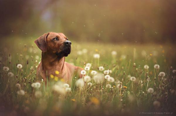 """Thiên nhiên Áo tuyệt đẹp làm nền cho những chú chó """"mẫu ảnh"""""""