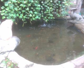 Ikan di lingkungan abiotik