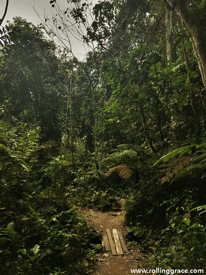 What To Do At Bukit Gasing Forest Park In Selangor, Malaysia