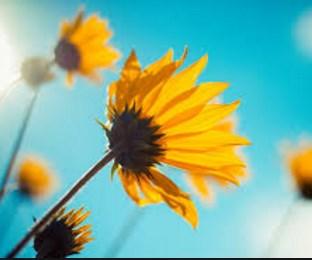 Arti Mimpi Membagikan Bunga Anggrek