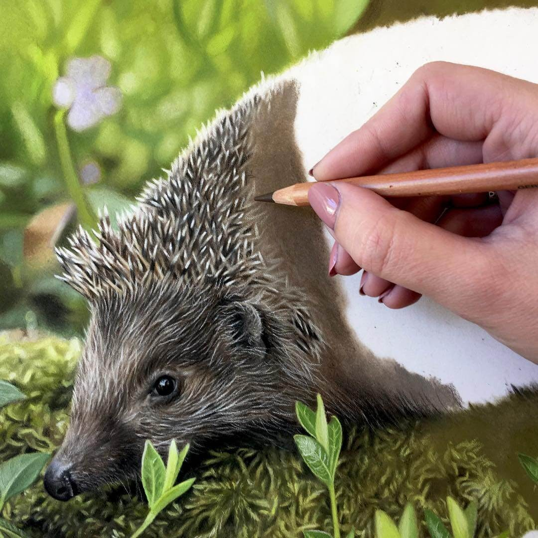 05-Hedgehog-WIP-Danielle-Fisher-Realistic-Animal-Portrait-Pastel-Drawings-www-designstack-co