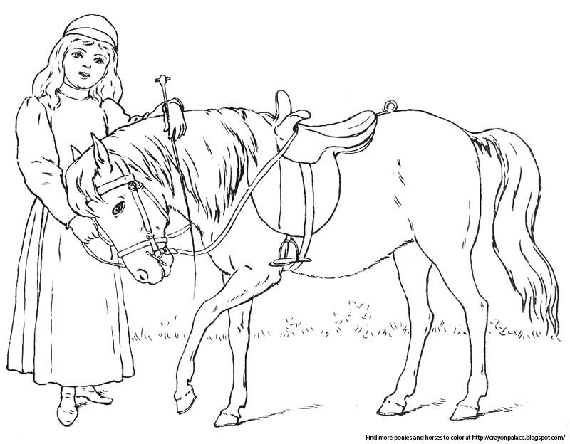 Stallion Wiring Diagram