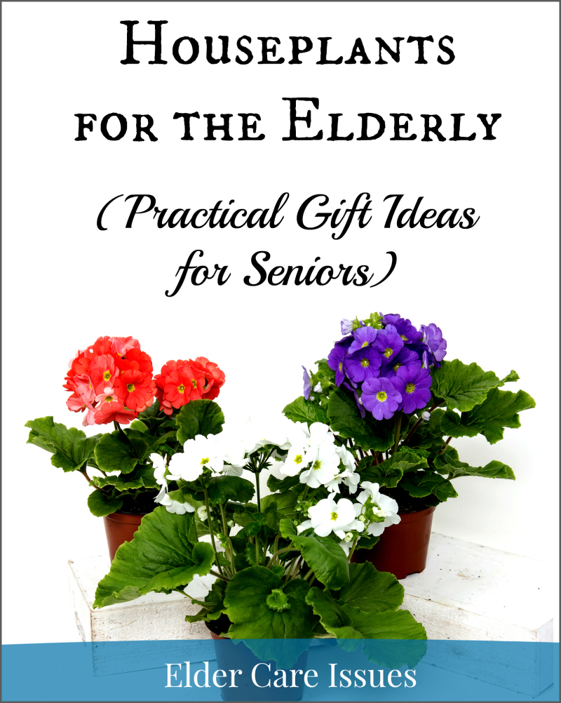 Practical Gift Ideas for Seniors  sc 1 st  Elder Care Issues & Houseplants for the Elderly--Practical Gift Ideas for Seniors ...