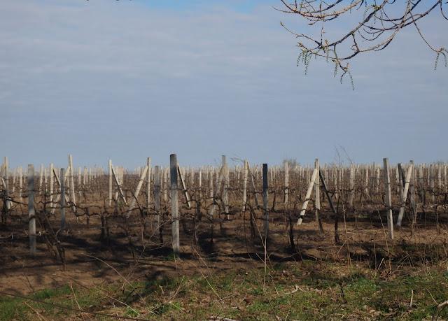 Jedna z mołdawskich winnic