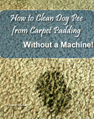 condo blues how to clean dog pee from carpet without a carpet cleaning machine. Black Bedroom Furniture Sets. Home Design Ideas