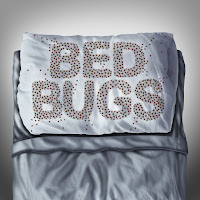 Bed Bug written on pillow.