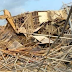 So Sad, One Week After, Several Persons Still Trapped in Rivers 7-Storey Building Collapse