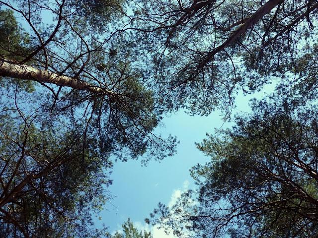 Las w Radości