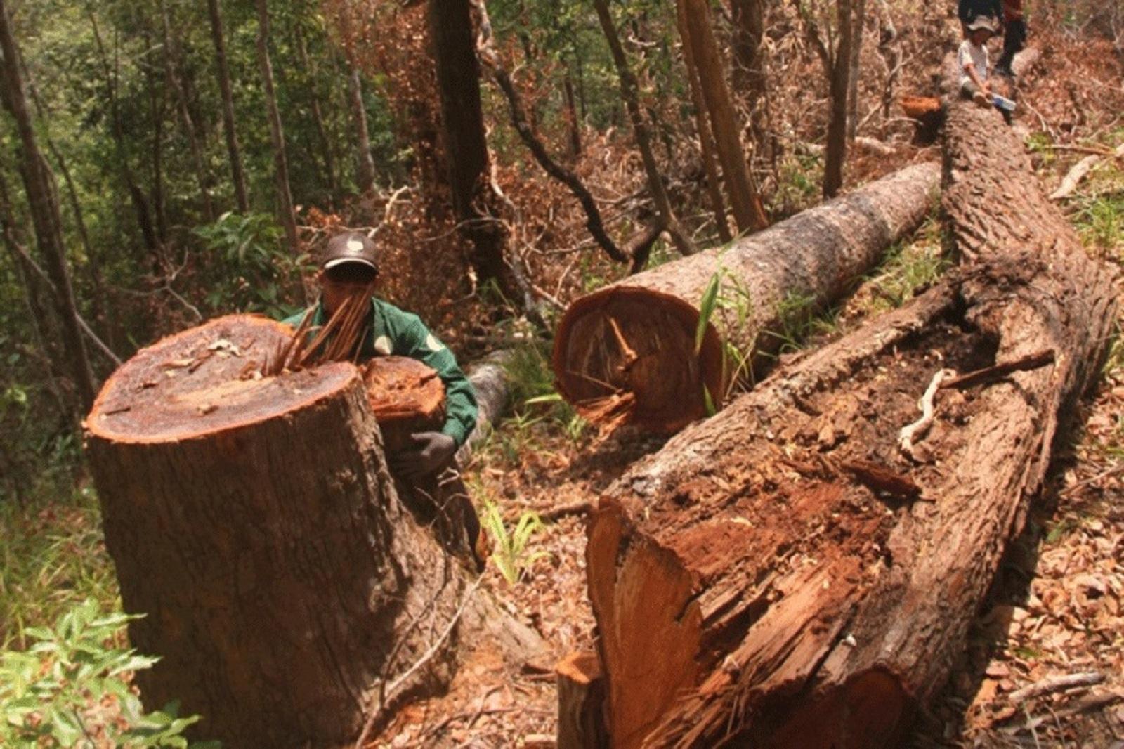 Gia Lai: Thuê đất làm thủy điện, sau 3 năm rừng mất, thủy điện chưa thấy đâu!