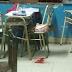 La estudiante herida podría ser trasladada a Buenos Aires