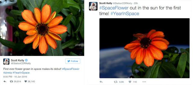 primeira flor no espaço - scott kelly