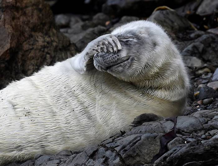 Baby seal in shock from what is happening. St. Maarten Bay, Wales, October 8. By: Rebecca Nadeen