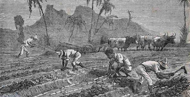 Esclavitud e historia de la economia