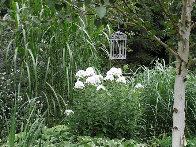biały ogród, floksy i miskanty