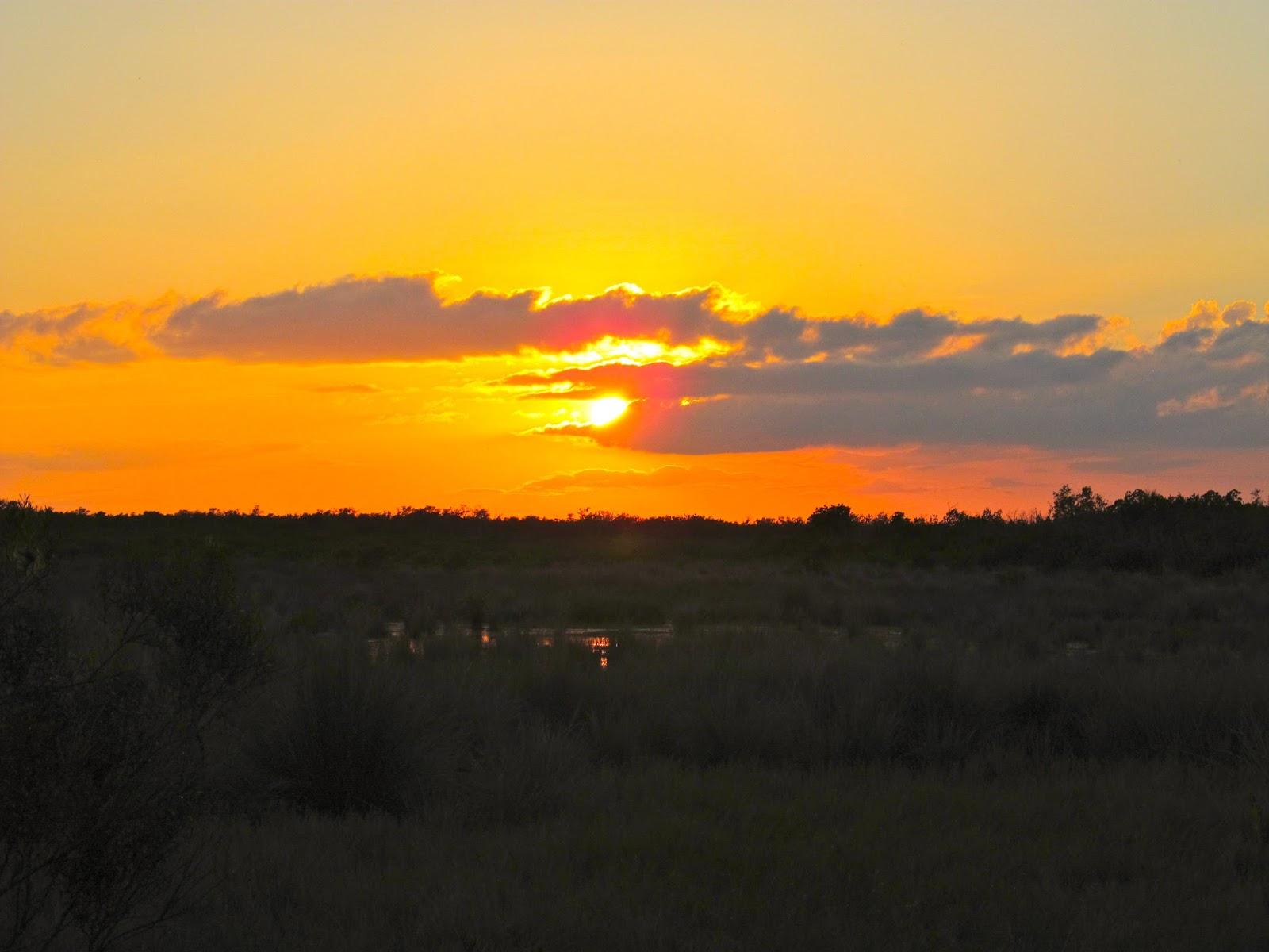 Sunset at Collier-Seminole Park - Naples, FL