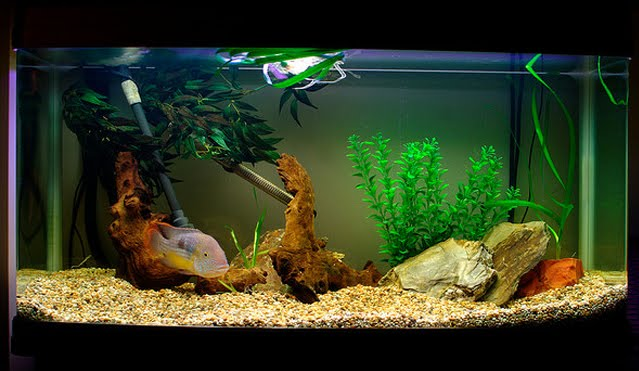 how to bring down nitrate levels in freshwater aquarium