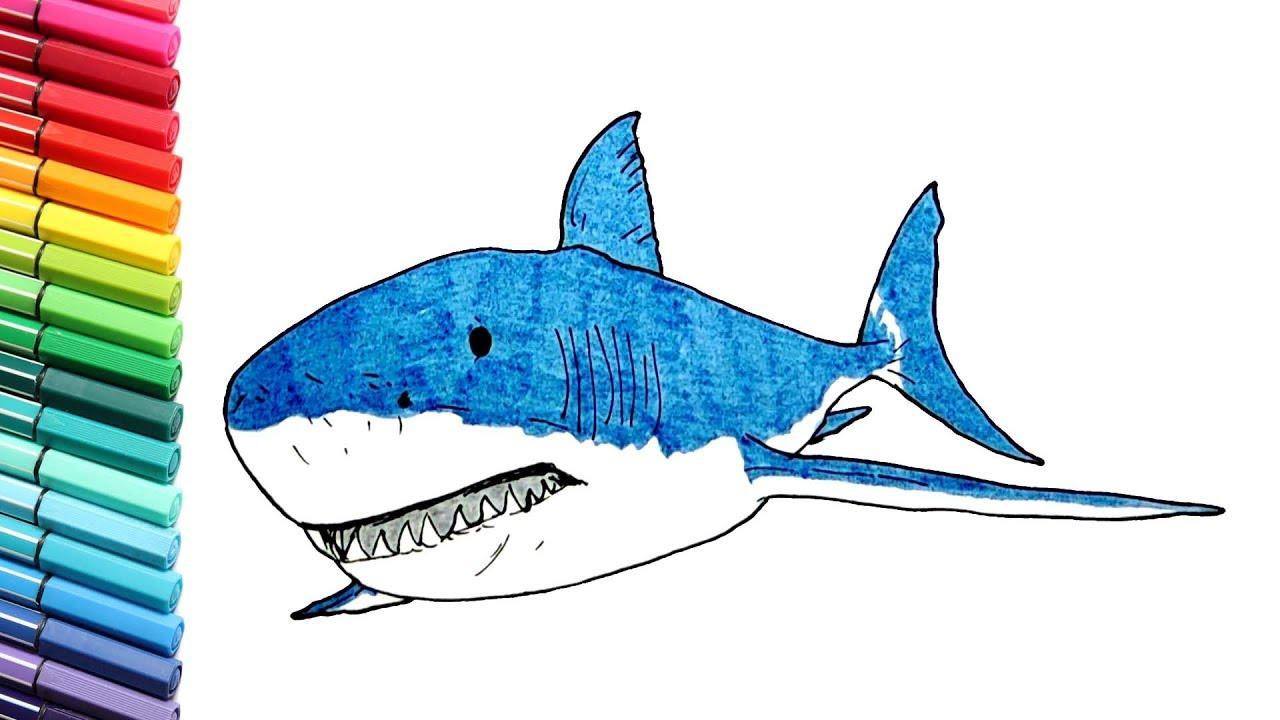 Gambar Anak Mewarnai Ikan Hiu Baby Shark Kumpulan Gambar Mewarnai