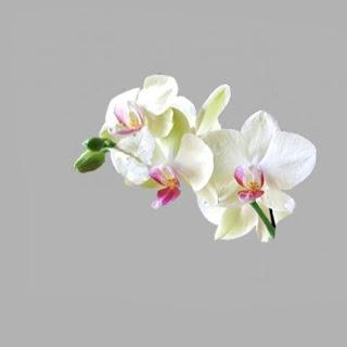 weiß mit kleiner Blüte