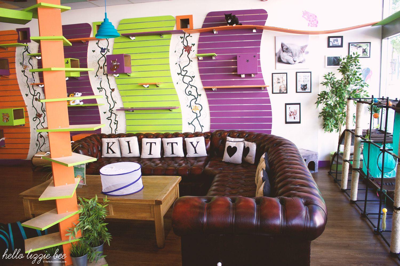 nottingham kitty cafe, cat lover, living room
