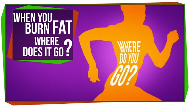 When You Burn Off That Fat, Where Does It Go