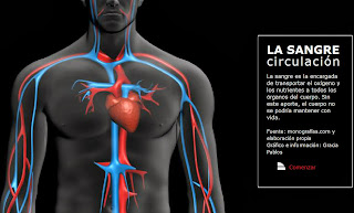 http://estaticos.elmundo.es/elmundosalud/documentos/2008/01/sangre_circulacion.swf
