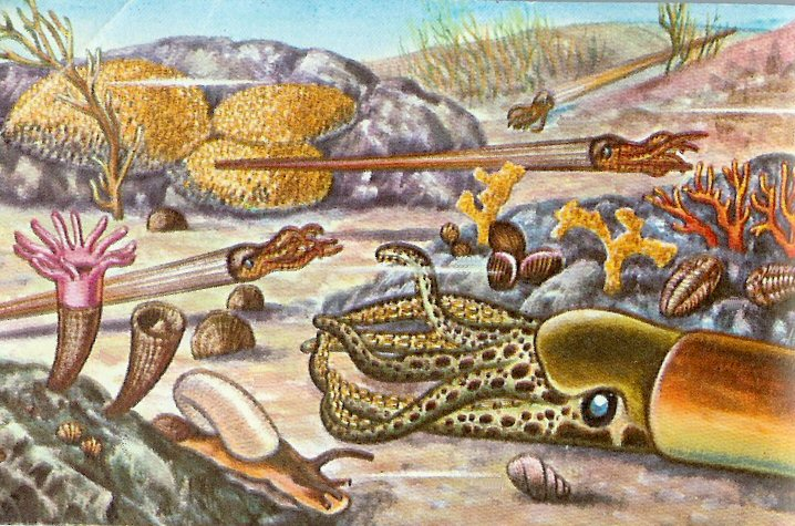 The Agatelady Adventures And Events Orthocerous Fossils