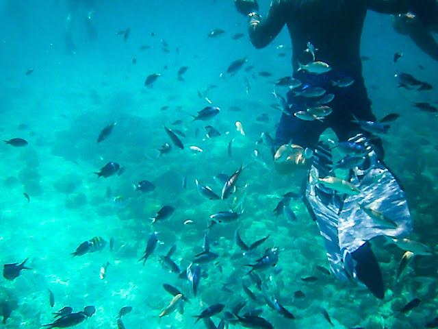 pelican adventures snorkeling