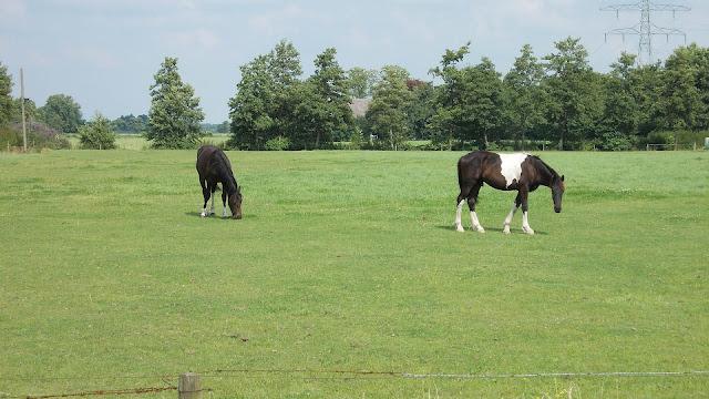 Foto paarden in het weiland