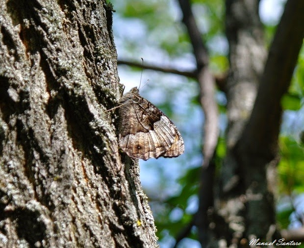 Valle dell'Orfento, farfalle