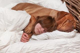 cachorros na cama