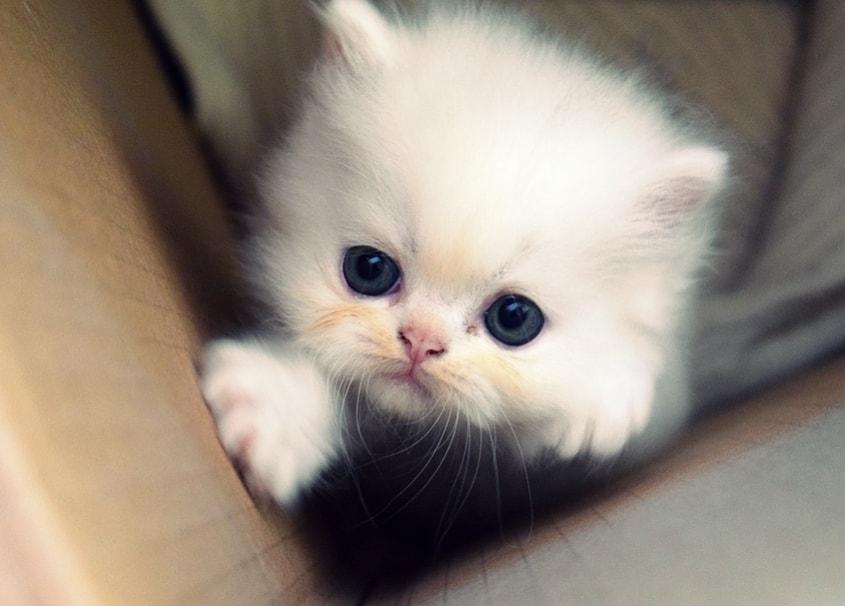 Gambar Anak Kucing Lucu Dan Imut