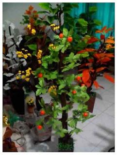 bunga gantung harga mulai 30 ribuan - bunga dinding harga mulai 30 ribuan -  daun red mango dan green mango harga mulai 150 ribuan 425870c0db