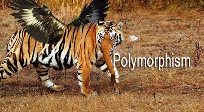 Polymorphism Banner