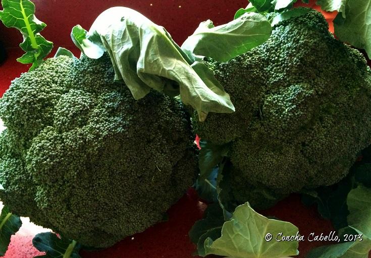 brócoli-verde