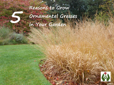 Reasons to Grow Ornamental Grasses in Your Garden Green Fingered Blog