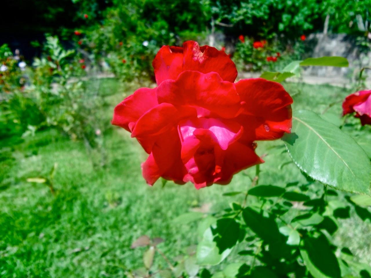 Parque Ecológico Chico Mendes flor