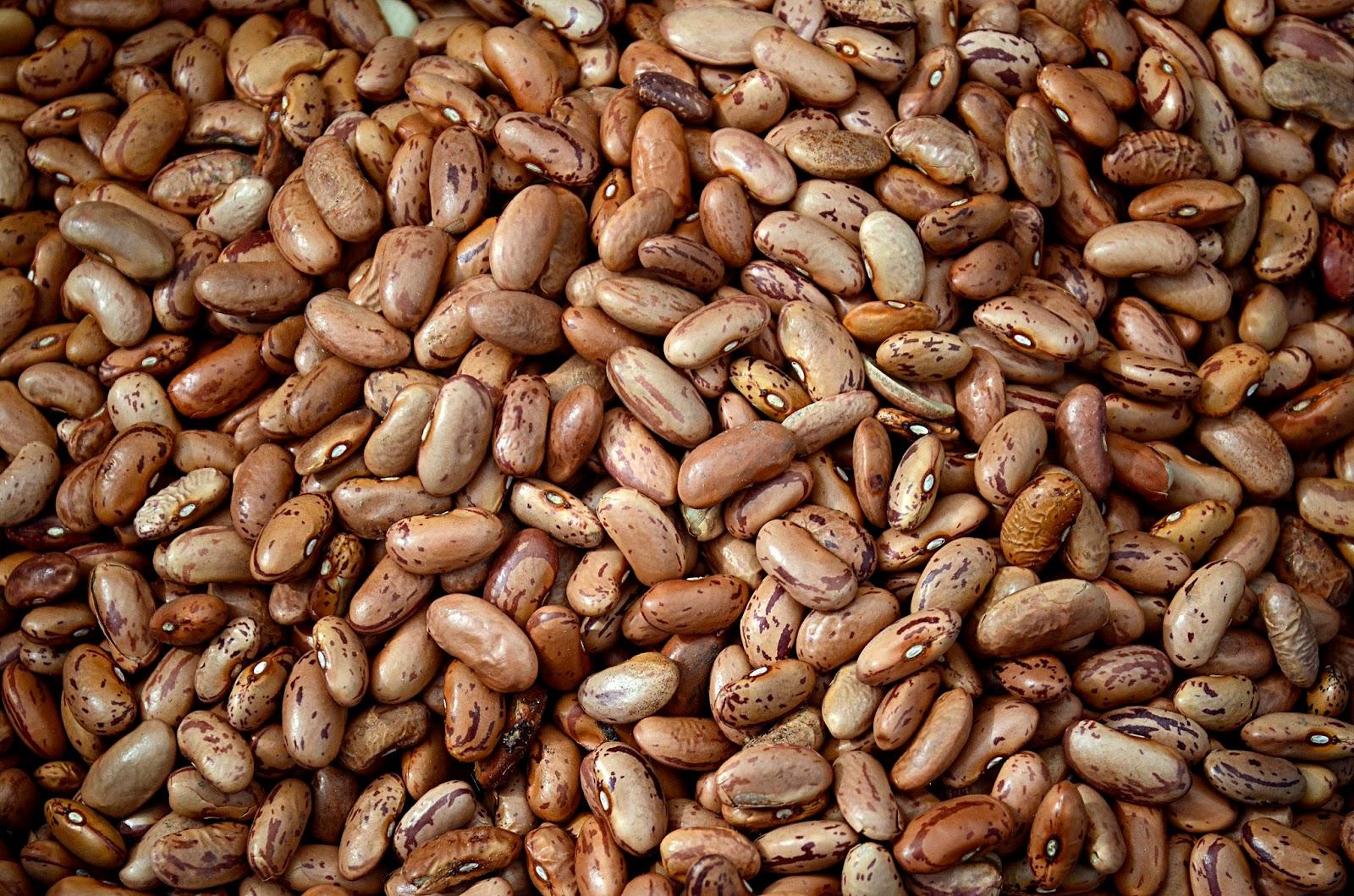 Phaseolus vulgaris seed